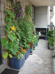 Urban Vegetable Garden For Small Spaces Balconies Byzantineflowers