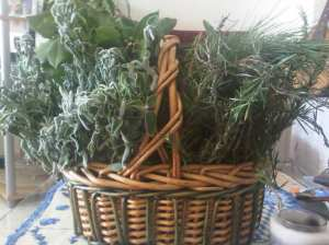 basket of wild herbs