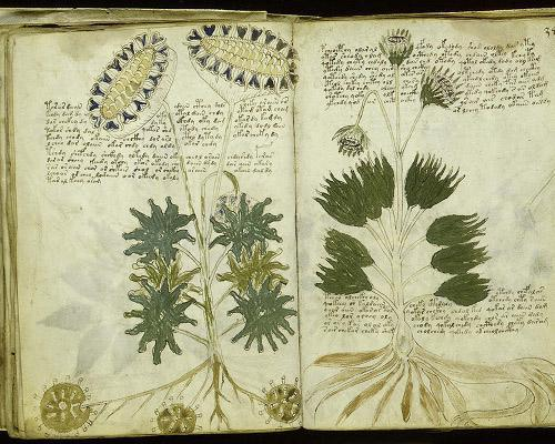 Voynich Manuscript Pdf The Voynich Manuscript is