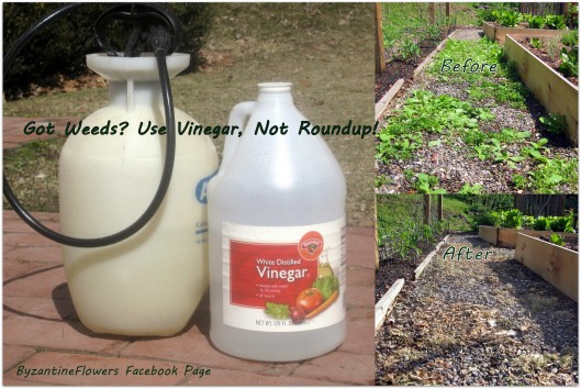vinegar-weed-killer