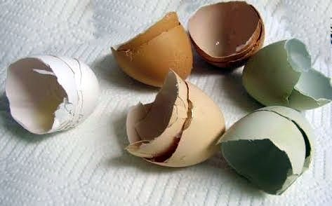 fresh-egg-shells