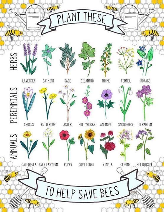 Garden Charts | ByzantineFlowers