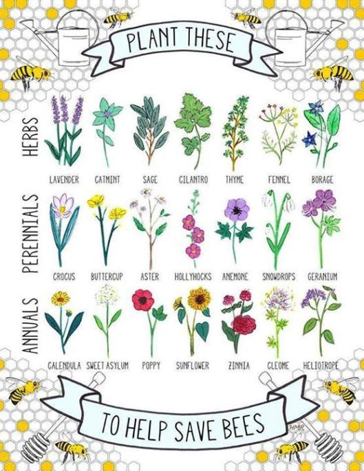 flowers and herbs for bees